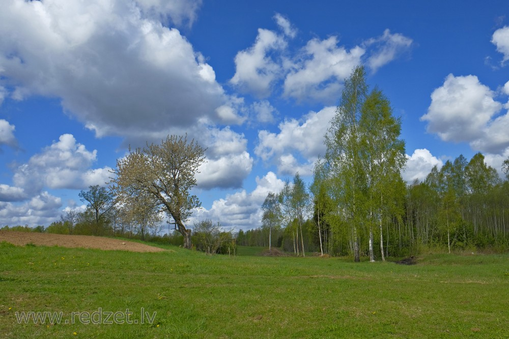 Countryside Landscape with Birches and Clouds