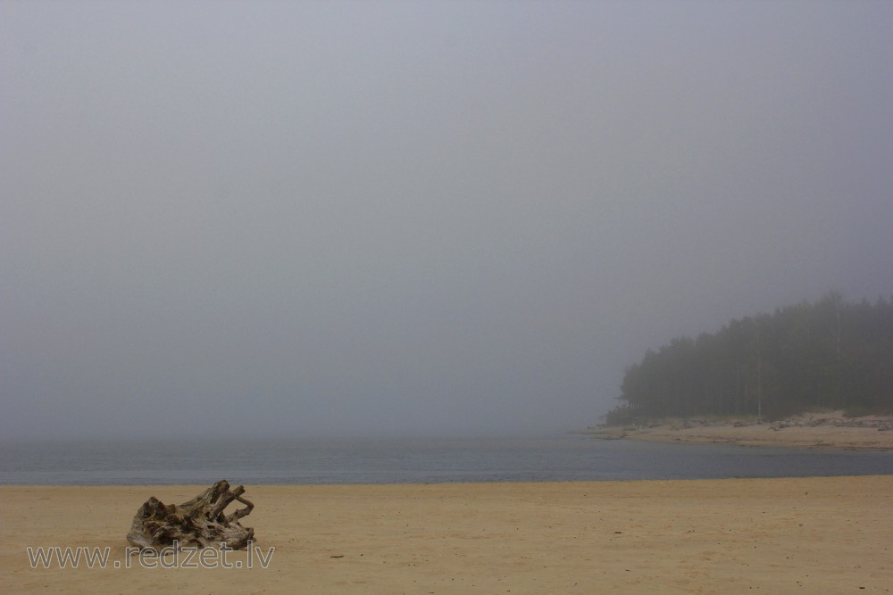 River mouth of Gauja in a Foggy Autumn Day