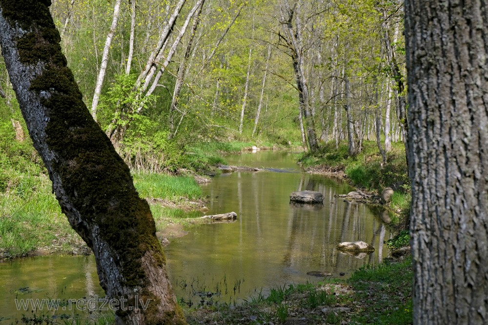 River Vilce in Vilce Nature Park