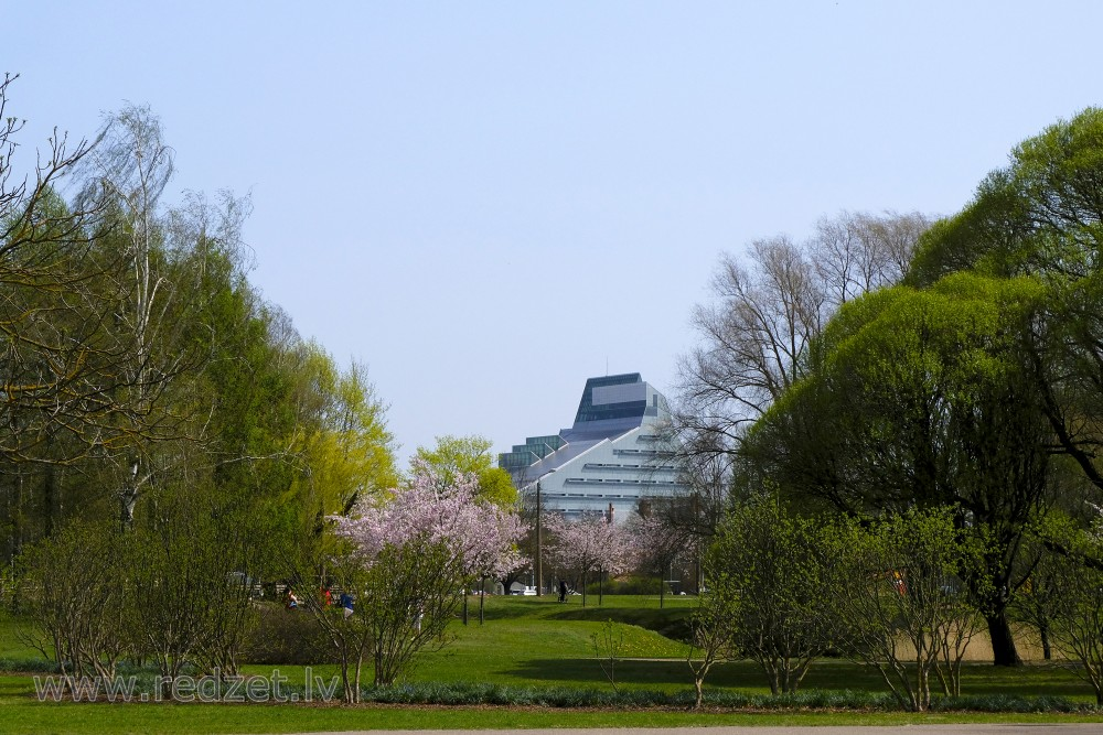 Victory Park, Flowering Sakura and National Library of Latvia