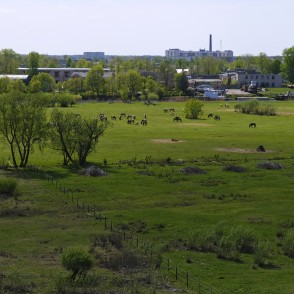 View from Jelgava Palace Island Viewing Tower to Lielupe Floodland Meadows and Wild Horses