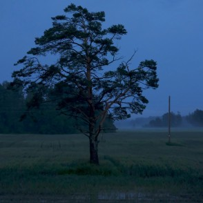 Night Landscape With Pine Trees