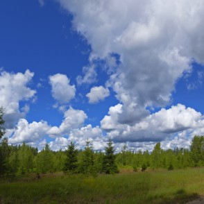 Forest Panorama With Cumulus Clouds