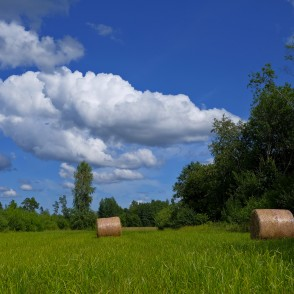 Meadow With Hay Rolls And Cumulus Cloud