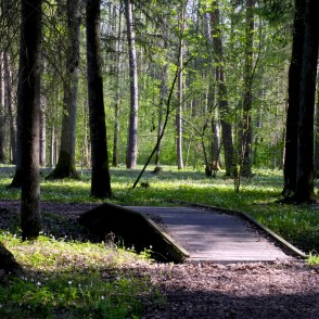 Footbridge in Langervalde Forest