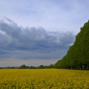 Evening landscape, Flowering Rape Field and Clouds