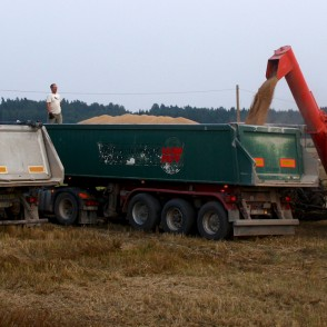 Combine Harvester bulking Grain in a Truck
