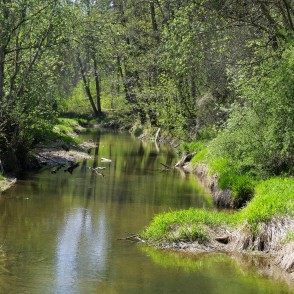 River Vilce in Vilce Ravine at Zaķi Meadow