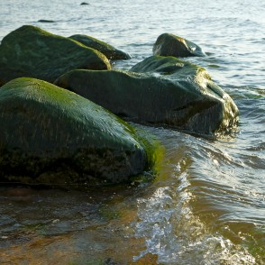Stones Covered with Green Algae