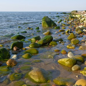 Green Algae on a Stones, Seashores of Kurzeme, Latvia