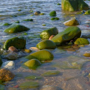 Green Algae Covered Stones