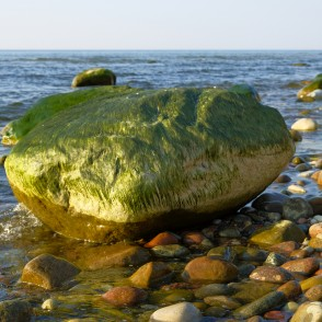 Green Algae on a Stones