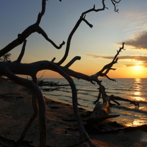 Sunrise at Cape Kolka, Dead Tree Silhouette