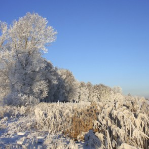 Talsi Winter Landscape