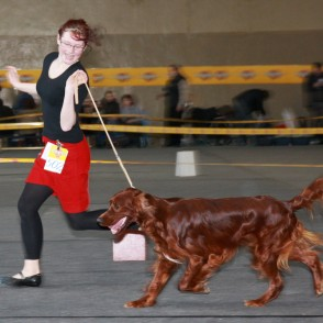 Īru seters (Irish Setter / Irish Red Setter)