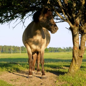 Horse Ander Tree