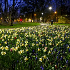Flowerbed at Night, New Town Square, Ventspils
