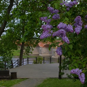 Common lilac and Brick Bridge