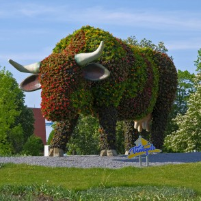 "Flower bed ""Flower Cow"""